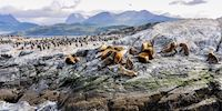 The Beagle Channel wildlife in Ushuaia, Argentina
