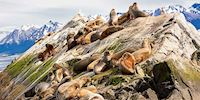 Sea Lions by the rocks in Ushuaia