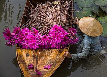 Flowers in boat during harvest in Mekong delta