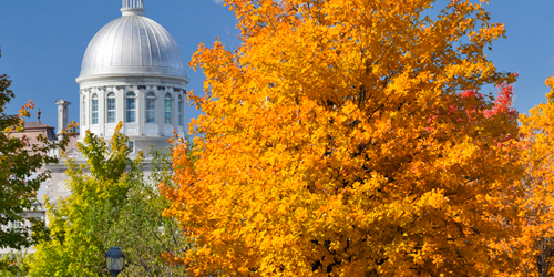 Autumn foliage and a white domed building in the background in Montreal.