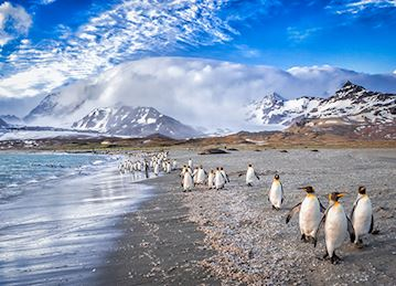 St. Andrews Bay penguins in South Georgia